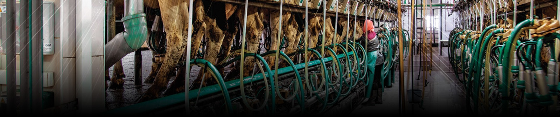 Solutions for the Dairy Industry